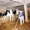 10.12.2017 / Atama Beklerken Hayvancılığa Başladı