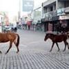 20.02.2019 / Sahipsiz Gezinen Atlar Görenleri Şaşırttı