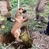 18.01.2020 / Kuyuya Düşen Köpeği Kurtarma Operasyonu Kamerada