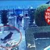 26.07.2020 / Eşini Isırdığı İçin Köpek Nero'yu Öldürdüğünü İddia Etmişti, Vahşetin Görüntüleri Ortaya Çıktı