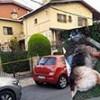 26.07.2020 / Eşini Isırdı Diye Köpeği Öldürdü!