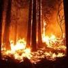 02.08.2020 / Ekoloji Birliği, Artan Orman Yangınları İçin Önlem Çağrısı Yaptı: Sadece Bir Ağacı Dahi Kaybedecek Lüksümüz Yok