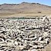 27.07.2021 / Kuraklık: May Barajı'ndaki Balıklar Öldü