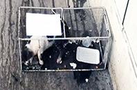 Markete Giren Kedi Hapsedildi