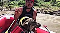Nehirden Köpek Kurtaran Raftingçiler